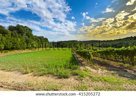 Hill of Tuscany with Vineyard in the Chianti Region at Sunset - stock photo