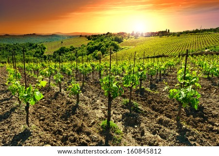 Hill of Tuscany with Vineyard in the Chianti Region, Sunset - stock photo