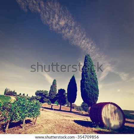 Hill of Tuscany with Vineyard in the Chianti Region, Vintage Style Toned Picture