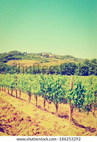 Hill of Tuscany with Vineyard, Instagram Effect