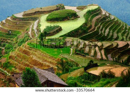 Hill, transformed into rice terraces with a few employees