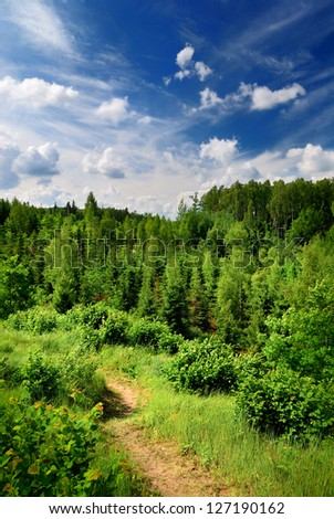 hills covered with forest - stock photo