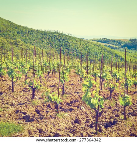 Hills of Tuscany with Vineyards in the Chianti Region, Instagram Effect