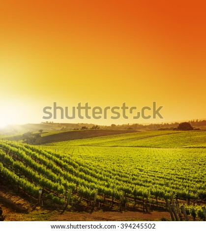 Hillside Vineyard at Sunset - stock photo