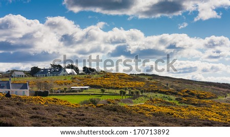 Hillside with pea flowers on Howth cliffs in Ireland against a cloudy deep blue sky - stock photo