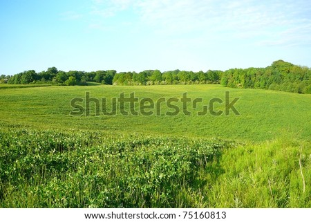 Hilly Grassland in Denmark on Summer Day - stock photo