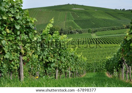 hilly vineyard #3, baden