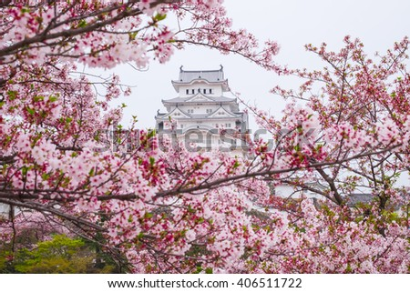 himeji castle surrounded by cherry blossom. This is a UNESCO world heritage site. Japan - stock photo