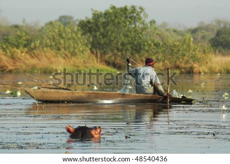 Hippo watching a fisherman check his nets - stock photo