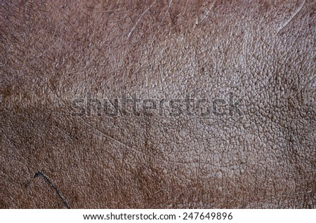 Hippopotamus Skin Texture Background. - stock photo