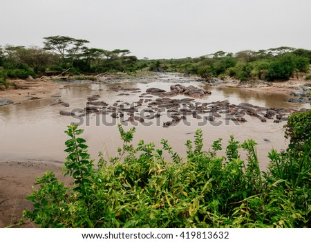 hippos in the pond - stock photo