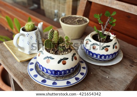 Hipster cactus  - stock photo