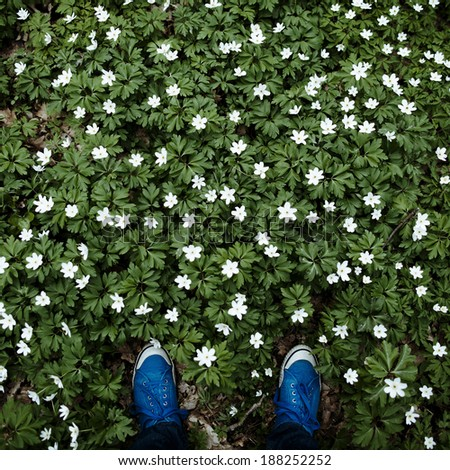 hipsters legs in meadow of white flowers - stock photo