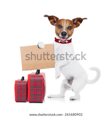 hitchhiker jack russell dog  waiting for a car for a  pickup, holding a cardboard with luggage, isolated on white background - stock photo