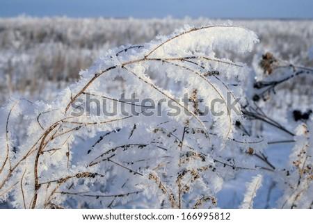 Hoarfrost - stock photo
