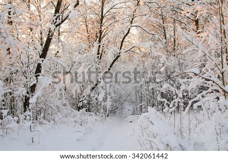 Hoarfrost and Rime on trees. Cold winter day at sunset. Frost and snow on the branches. Panorama of the winter forest. The winter landscape. Snow fairy forest. Pink rays of the sun. December new year. - stock photo