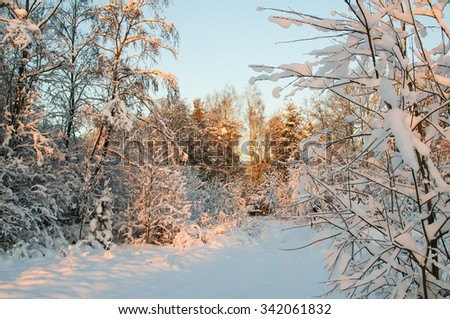 Hoarfrost and Rime on trees. Sunset in the winter forest. Frost and snow on the branches. Panorama of winter forest. Winter landscape. Snow fairy forest. Pink rays of the sun. December new year. - stock photo