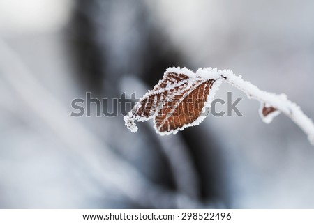 Hoarfrost on the leaves in winter forest. Beautiful winter nature. Macro image, selective focus - stock photo