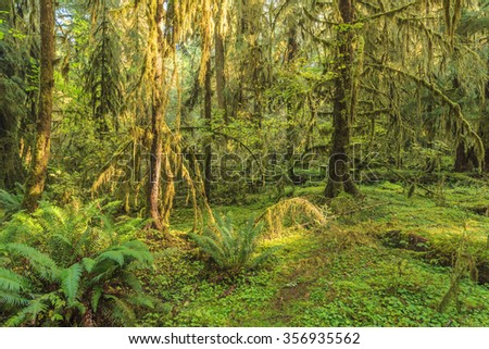 Hoh Rainforest, Olympic National Park, Washington state, USA.