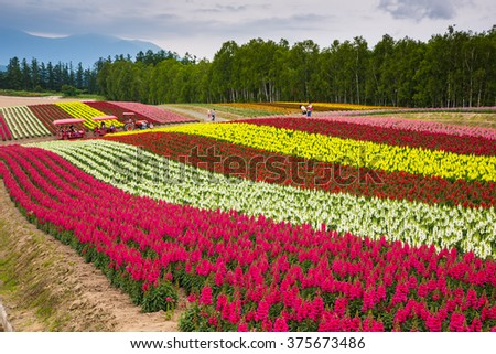 Hokkaido Japan - 6 Jul 2014: Rainbow like colorful flower farm in summer in Furano