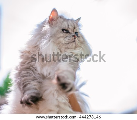 Hold Persian cat in the white sky background - stock photo