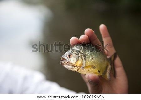 Holding a peruvian yellow piranha in the Amazon in Puerto Maldonado.