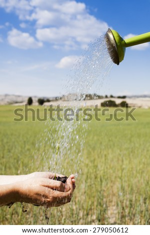Holding cereal crop while being watered against rural scenic - stock photo