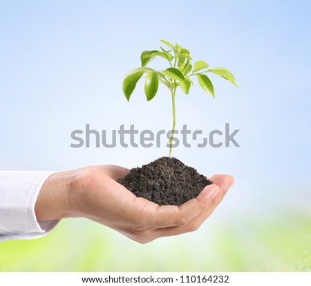 holding green plant in hand