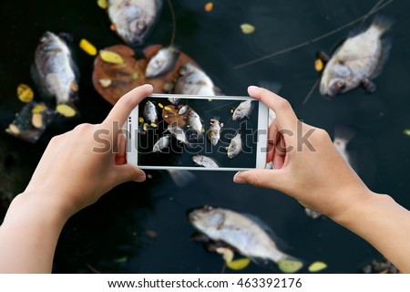 Holding smart phone for capture, Take a photo of dead fish floated in the dark water, water pollution.