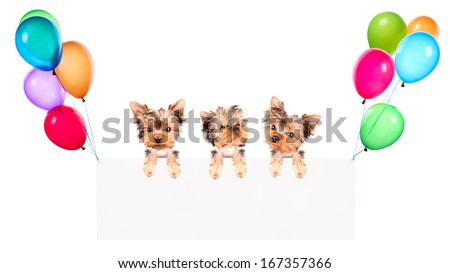 Holiday banners with colorful balloons and puppy dog isolated on white