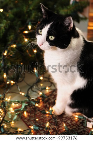 Holiday pet safety and cat with Christmas lights - stock photo