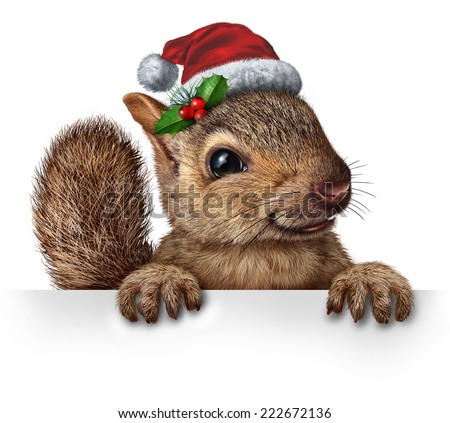 Holiday squirrel wearing a santa clause hat with  holly and red berries hanging over a blank banner sign with copy space gripping a billboard as a Christmas new year or winter celebration message. - stock photo