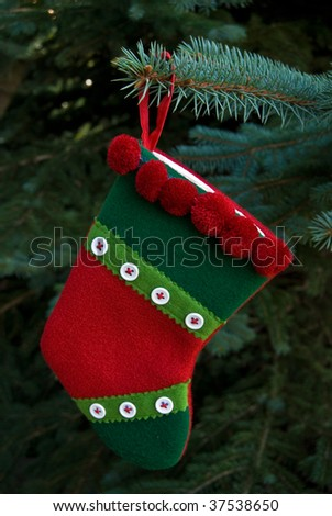 holiday stocking hanging from blue spruce pine - stock photo
