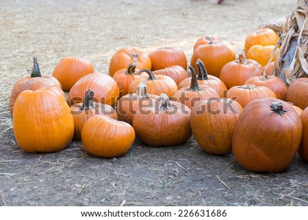 Holidays pumpkins - stock photo