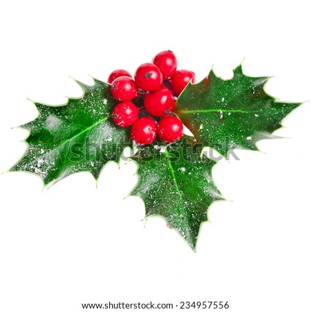 Holly Christmas decoration. Clipping path included.  - stock photo