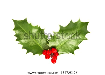 Holly leaves and berries isolated on white background. Christmas postcard concept - stock photo