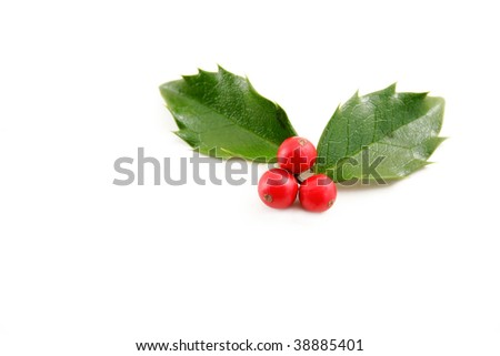 Holly leaves with red berries on a white background with room for your text. - stock photo