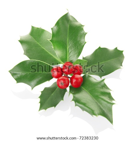 Holly sprig isolated on white, clipping path included - stock photo