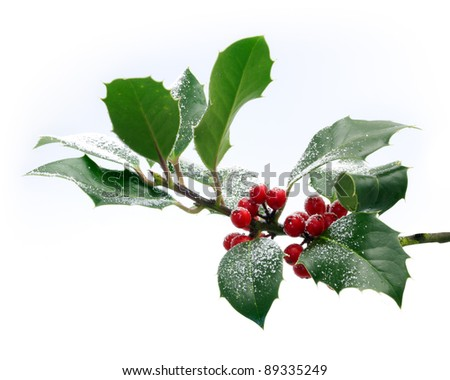 Holly Sprig on white - stock photo