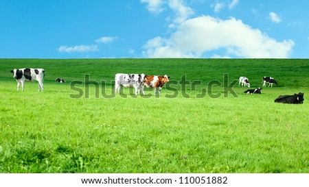 Holstein cows in a lush pasture - stock photo