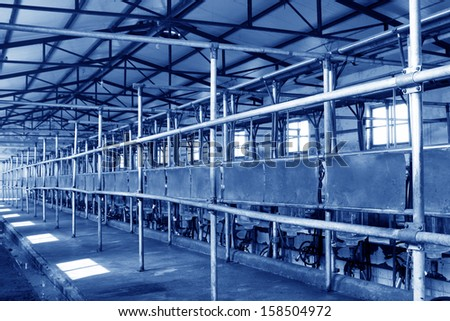 Holstein cows in a mechanization milking hall in China  - stock photo