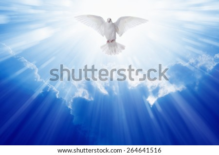 Holy spirit dove flies in blue sky, bright light shines from heaven, christian symbol - stock photo