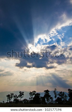 holy with tree - stock photo