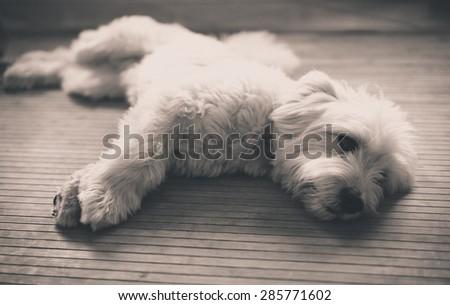 Home dog portrait - stock photo