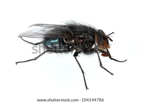 Home-fly isolated on white - stock photo