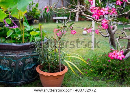 Home garden - grass field, stone bench, wooden bench, lotus bowl, lily flowers and soccer ball