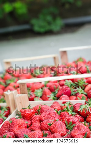Home grown strawberries in a wooden basket (crate). Selective focus, DOF - stock photo