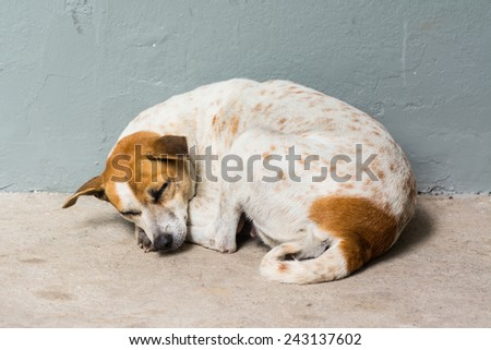 Homeless abandoned dog sleeping on the street
