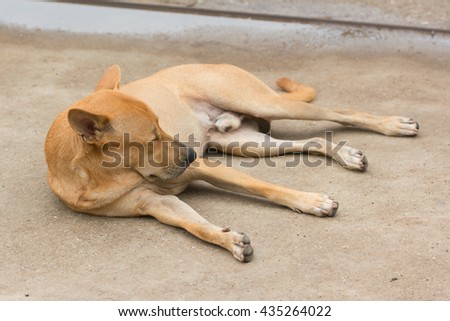 Homeless abandoned dog sleeping on the street,selective focus - stock photo