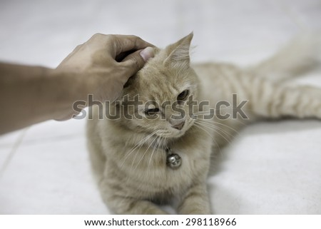 Homeless animals series. Carer comforting a sick cat in in a cage, cat is suffering from cat - stock photo